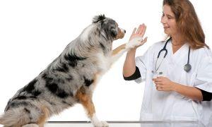 Советы о том, как стать ветеринаром