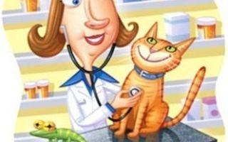 Какие особенности профессии ветеринар?