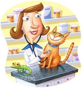Профессия ветеринар - что нужно знать, категории, особенности