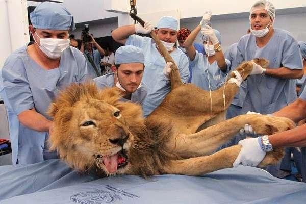 Колледжи для получения специальности ветеринара